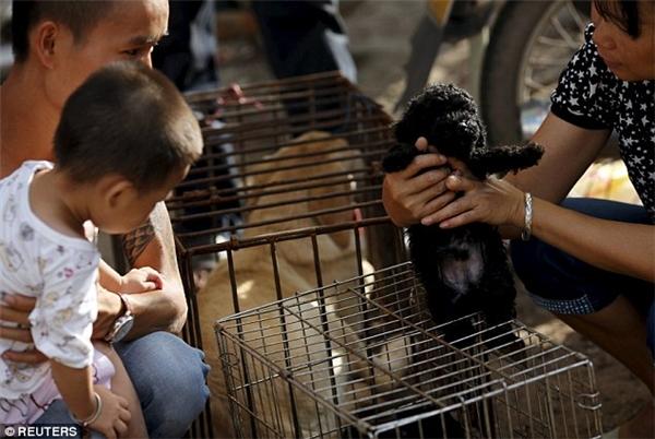 Một chú cún khác thì đang được khách hàng chọn lựa để đem về làm thú cưng. (Ảnh: Internet)
