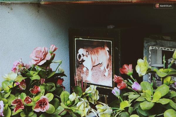 Nghĩa trang dành cho chó, mèo độc nhất ở Hà Nội
