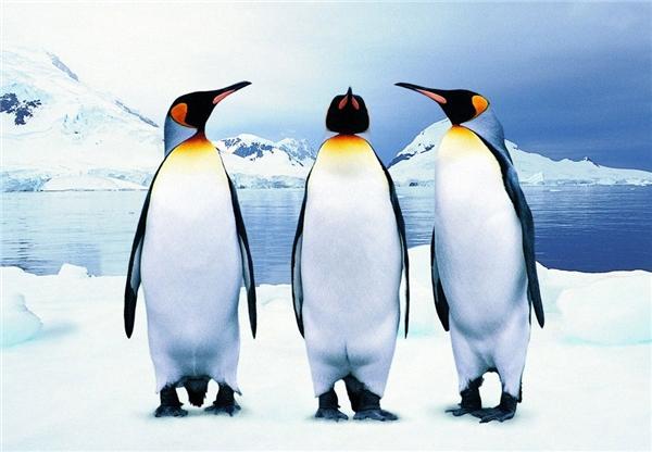 """Câu 3: Một """"siêu thợ săn"""" sống ở Bắc Cực. Ông ta có thể săn rất nhiều con vật trừ chim cánh cụt. Vì sao lại như thế?"""