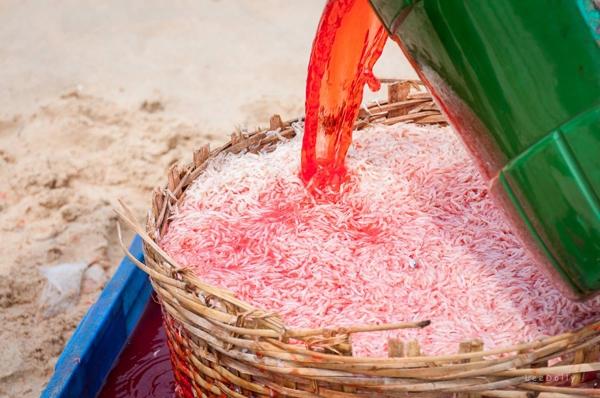 Ruốc được nhuộm đỏ bằng hóa chất tại biển Gành Đỏ, dưới chân cầu Gành Đỏ (Sông Cầu, Phú Yên). (Ảnh: Lê My)
