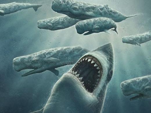 """Cá mậpMegalodonchính là tổ tiên của """"hung thần biển cả"""" cá mập trắng hiện tại.(Ảnh: Internet)"""