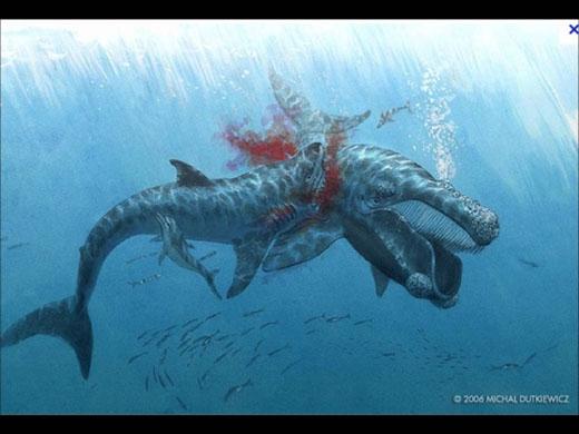 Thức ăn củaMegalodonlà cá voi và cá nhà táng.(Ảnh: Internet)