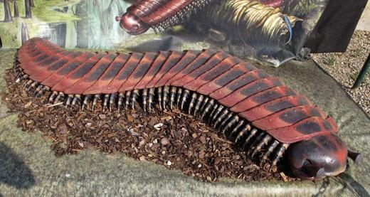 Vẻ ngoài đáng sợ cùng kích thước tối đa tới 2 mét củaArthropleurasẽ là một nỗi kinh hoàng đối với nhiều loài.(Ảnh: Internet)