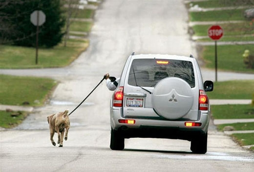 8. Dắt chó đi dạo bằng...ô tô sao?(Ảnh: Internet)