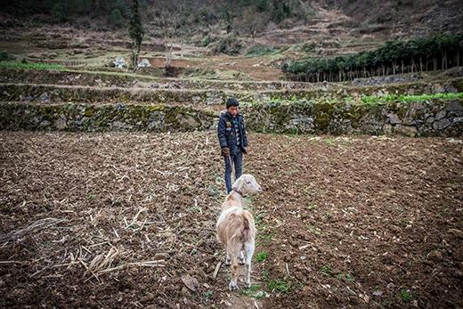 Chú cừu nhỏ do vay tiền mới mua được, hy vọng sẽ giúp được gia đình Đông kiếm thêm chút tiền. (Ảnh: Internet)