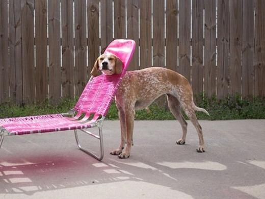 Chiếc ghế hồng xinh xắn sao nỡ lòng giữ chân anh?