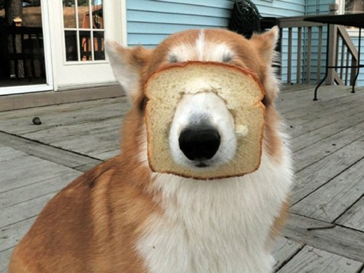 Bánh mì để ăn chứ không phải cái rọ mõm đâu nhé!