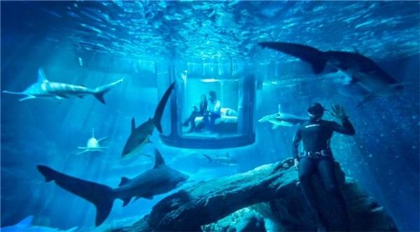 1 đêm lãng mạn cùng với người yêu và... 35 con cá mập, bạn có dám? (Ảnh: Internet)