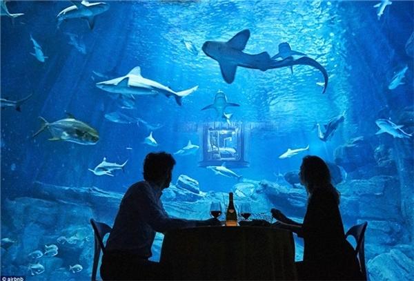 """Bạn sẽ nằm ngủ trong một căn phòng có kính trong suốt để trải nghiệm """"cá mập trọn vẹn"""".(Ảnh: Internet)"""