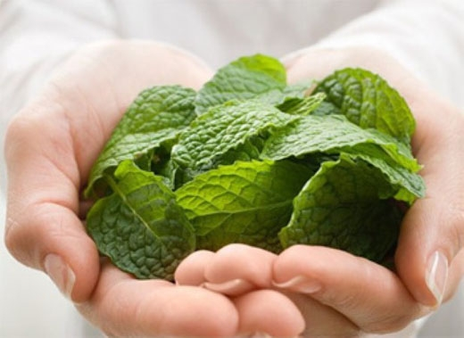Mặc dù mùi hương bạc hà có khả năng loại bỏ mùi hôi nhất thời song lượng đường trong các loại kẹo bạc hà lại làm cho hơi thở trở nên khó chịu hơn. (Ảnh: Internet)