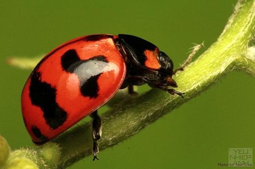 Những loại côn trùng nhỏ sẽ mang lại may mắn cho bạn. (Ảnh: Internet)