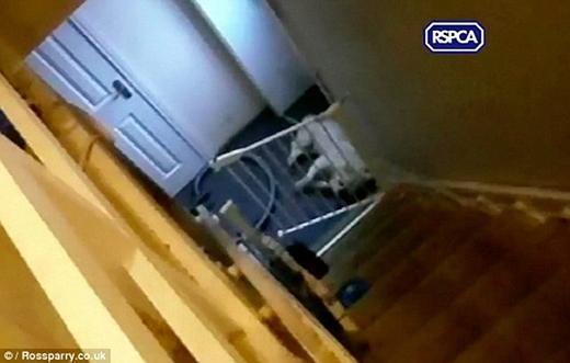Gã thanh niên tên Andrew Frankish nhấc chú chó lên cao rồi ném xuống cầu thang.