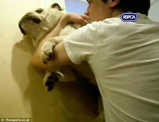 Phẫn nộ thanh niên bệnh hoạn quăng, dẫm lên chó như đồ vật