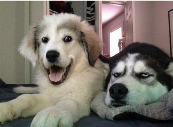 Trên đời này có 2 loại người, 1 loại cực kìồn ào và 1 loại vô cùng buồn ngủ.