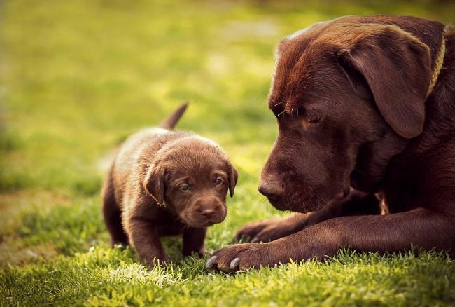 Ánh mắt mẹ đầy tự hào và vui sướng khi nhìn con chập chững những bước đi đầu tiên.