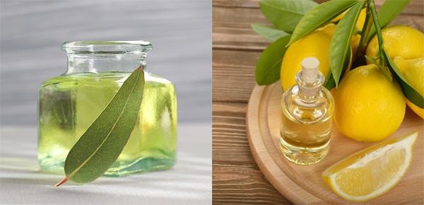 Pha hỗn hợp dầu khuynh diệp và tinh dầu vỏ chanh theo tỷ lệ 1:1 rồi thoa lên da để chống muỗi cắn.
