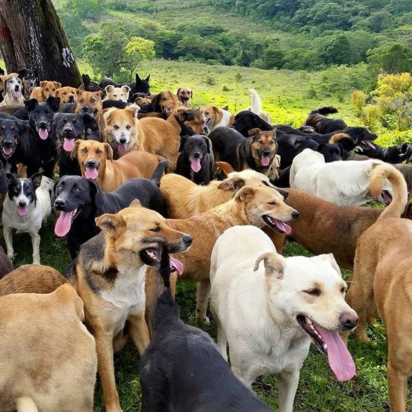 Thánh địa của loài chó, đơn giản là vùng đất chỉ toàn chó là chó, chó ở 4 phương 8 hướng, tiện chân bước bừa cũng có thể trúng vào chó.(Ảnh: Internet)