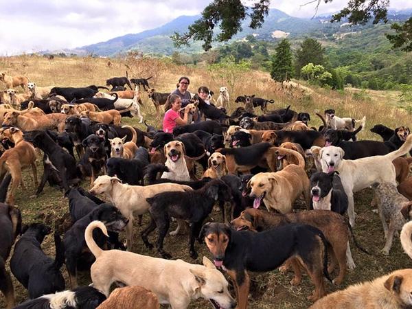 Thiên đường dành cho cả chó và người yêu chó!(Ảnh: Internet)