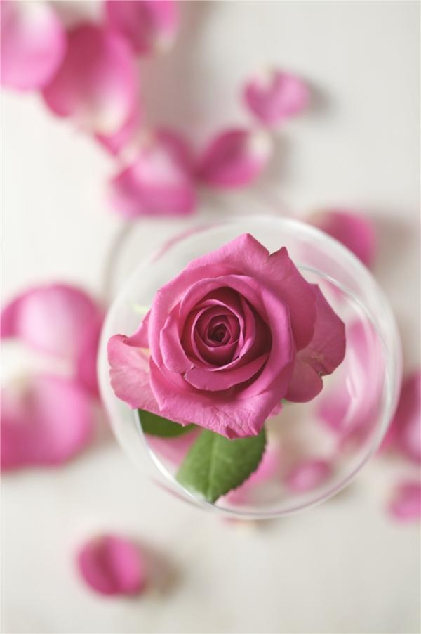 Để có làn da sáng mịn cô phải dưỡng ẩm da với nước hoa hồng. (Ảnh: Internet)