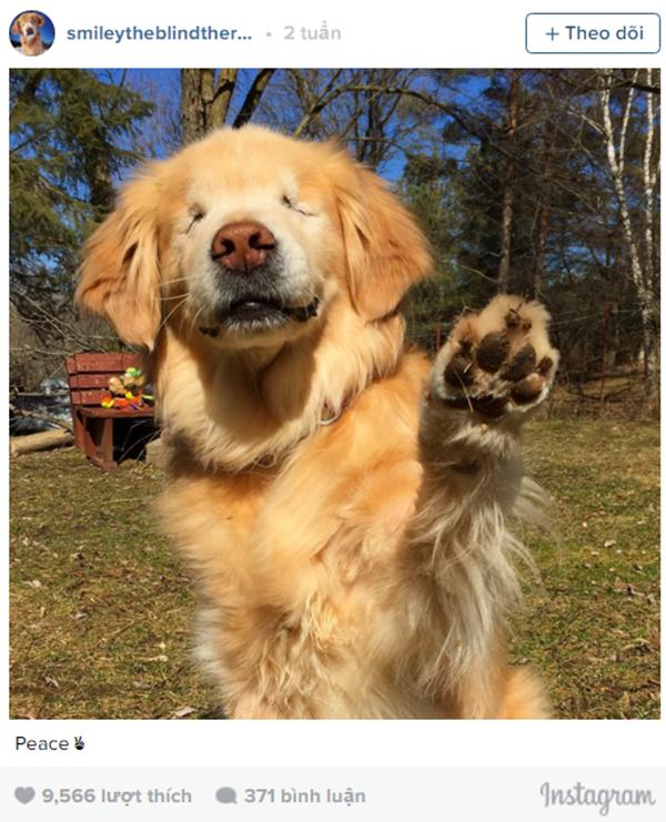 Bài học sâu sắc từ cuộc đời một chú chó mù lòa