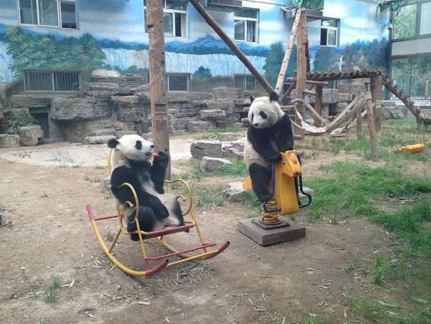 Kỳ lạ 2 thanh niên trốn học ra công viên chơi thú nhún.