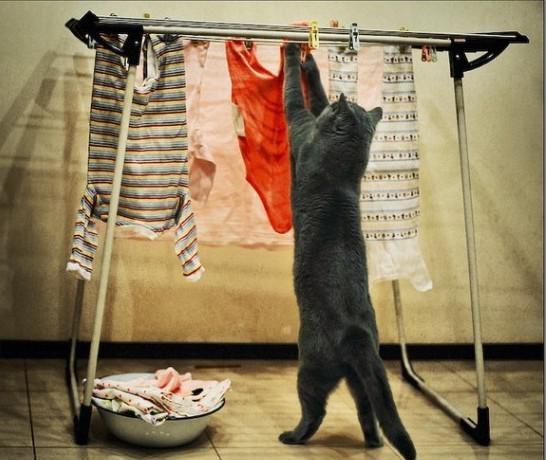 Giặt đồ đã có máy giặt, phơi đồ đã có em.