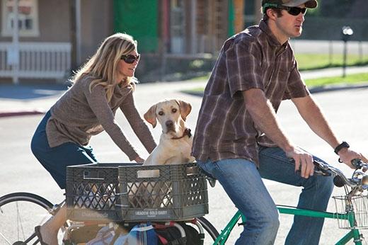 Anh chàng này thì gắn cho chó cưng của mình một chiếc thùng nhựa để ngồi được thoải mái. (Ảnh: Internet)