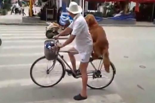 """""""Chú mày ngồi cho vững ông chở đi dạo phố nhé!"""" (Ảnh: Internet)"""
