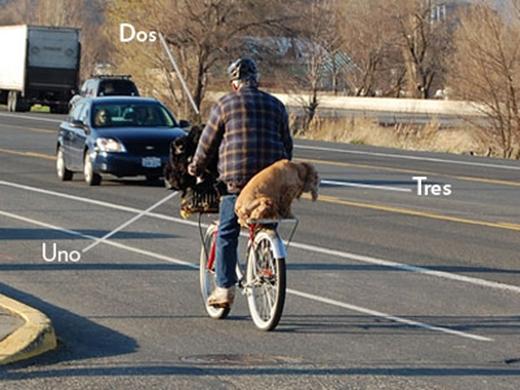 Người đàn ông này không chỉ chở một chú chó ở yên sau mà còn có hai chú chó ở giỏ xe nữa. (Ảnh: Internet)