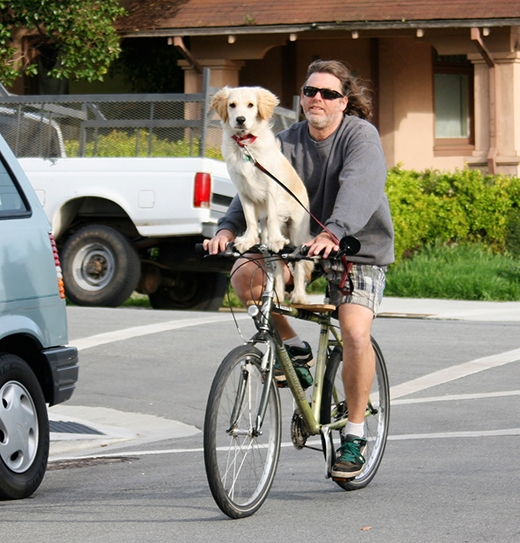 Ông chủ này còn cẩn thận đặt một chiếc ván lên sườn xe đạp cho chó cưng đứng. (Ảnh: Internet)