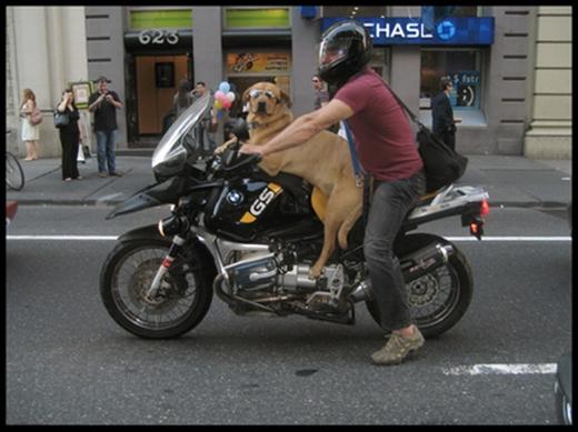 Lên xe đi khắp thế gian phiên bản chủ và chó