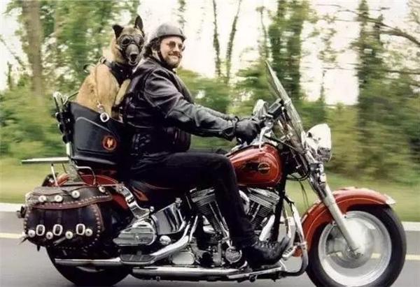 Không những chủ mà chó cưng cũng đeo kính đen cực ngầu trên xe mô-tô. (Ảnh: Internet)