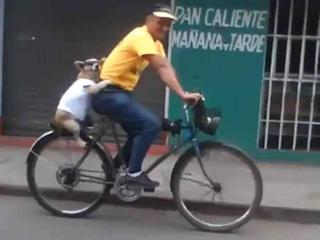 Chú chó này ngoan ngoãn ngồi trên yên sau xe đạp, lại còn ôm chủ rất trìu mến nữa. (Ảnh: Internet)