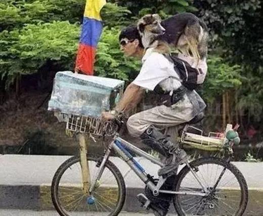 Ông chủ này nhờ có đeo ba lô nên chú chó cưng đã có chỗ để đứng. (Ảnh: Internet)