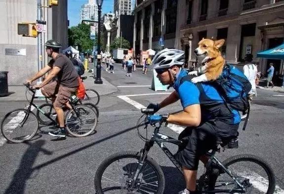 Anh chàng này đeo ba lô chỉ để chứa chú chó cưng trên lưng mà thôi, thật là... soái ca của cún mà. (Ảnh: Internet)