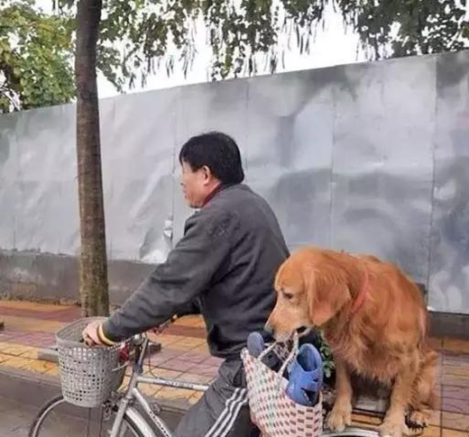 Chú chó này ngồi đằng sau ngậm giỏ giúp chủ, một hành động rất đáng khen ngợi. (Ảnh: Internet)