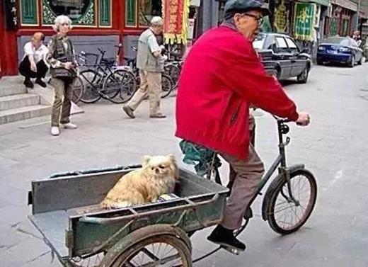 Ông chủ này còn sửa soạn cả một thùng xe đằng sau cho chú chó kiểng ngồi ngắm cảnh phố phường. (Ảnh: Internet)