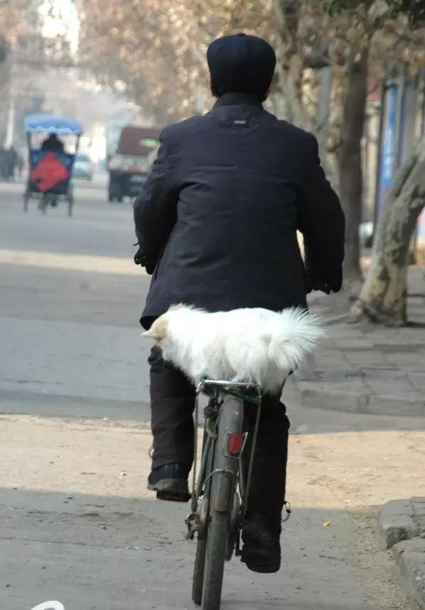Ông chủ mặc nguyên cây đen còn chó cưng thì mang bộ lông trắng toát ngồi phía sau trông thật nổi bật. (Ảnh: Internet)