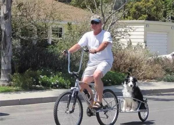 Ông chủ này mắc thêm vào sau xe chỗ ngồi gọn nhẹ cho chó cưng, trông rất sáng tạo. (Ảnh: Internet)