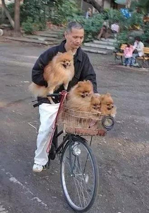 Một giỏ 3 cún, trên tay một cún thật sự rất phong cách và... phong độ. (Ảnh: Internet)
