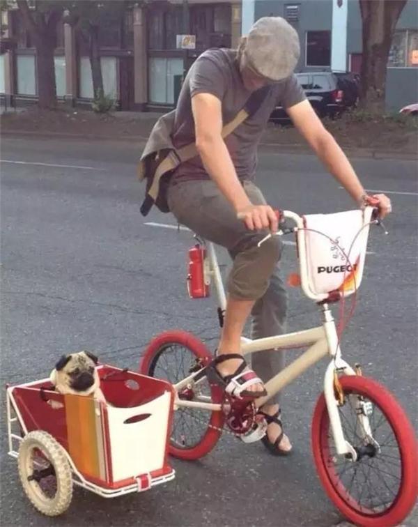 Chiếc xe thùng nhỏ bên cạnh tông xuỵt tông với xe đạp, lại còn chở em cún rất đáng yêu nữa, ai lại có thể không nhìn theo chứ. (Ảnh: Internet)