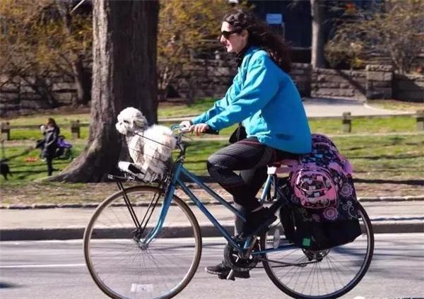 Cún cưng ngồi trong giỏ xe cũng là để giữ ví cho cô chủ đấy nhé. (Ảnh: Internet)
