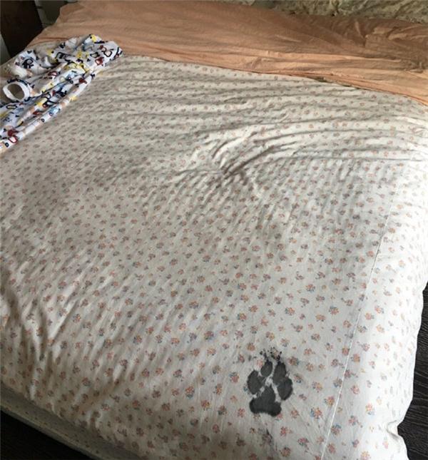 Sau khi mặc sức thả hồn vào tác phẩm sàn nhà bay bướm, anh chàng quyết định thay đổi phong cách bằng việc vẽ một bức tranh tối giản trên chiếc giường của chủ nhân. (Ảnh: Internet)