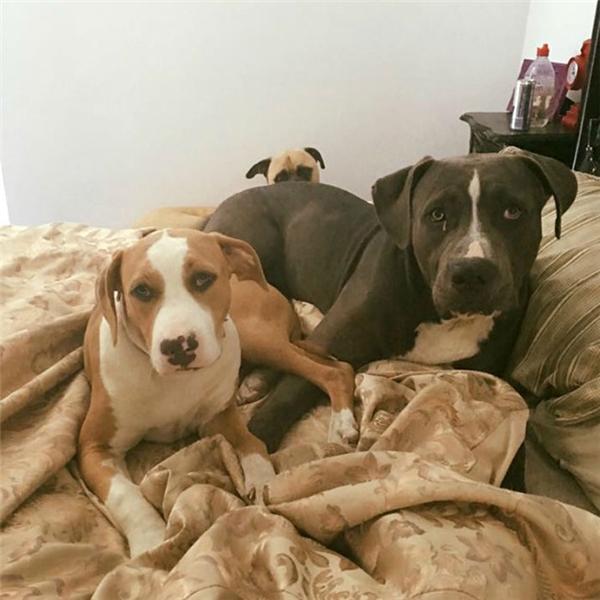 Thậm chí khi những chú chó khác rất thoải mái và tự nhiên cho Lauren chụp ảnh thì Cyrus cũng chỉ đứng lấp ló đằng sau. (Ảnh: Lauren Birney)