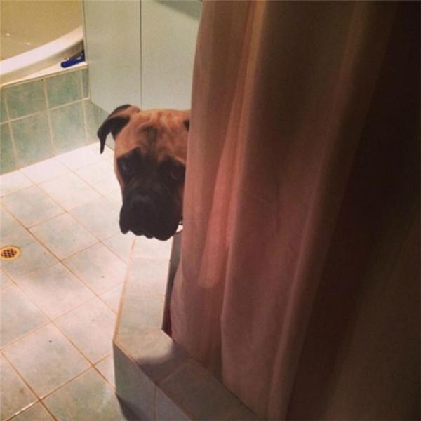 """Ngay cả khi """"trốn"""" vào phòng tắm cũng không thoát. (Ảnh: Lauren Birney)"""