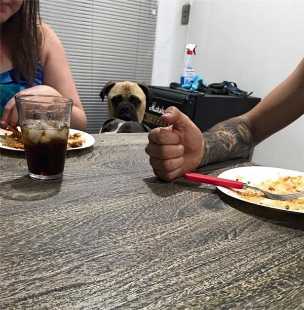 """""""Đồng bọn"""" xin ăn thì xin nhưng Cyrus chỉ chăm chăm nhìn cô chủ mà thôi. (Ảnh: Lauren Birney)"""
