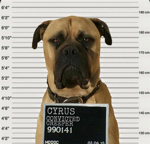"""Vì thế mà Cyrus trở thành """"tội phạm rình mò"""" trong mắt cô chủ Lauren nhưng cậu chàng cũng chẳng quan tâm, vẫn tiếp tục """"nhiệm vụ cao cả"""" của mình. (Ảnh: Lauren Birney)"""