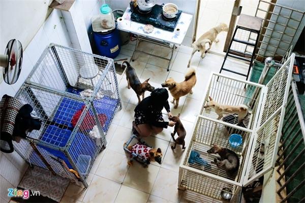 Uyên Như thu lượm chó mèo khắp nơi, từ nguồn tin của bạn bè. Có lần, Như còn chạy về tận Bến Tre để cứu một thú cưng bị chủ bỏ.