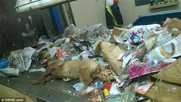 Cộng đồng mạng phẫn nộ với xác 2 chú chó bị vứt trong xe rác