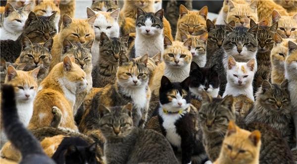 """Biểu cảm """"hình sự"""" của bầy mèo này có khiến bạn liên tưởng đến cuộc họp kín của các tay xã hội đen Nhật thường thấy trên phim? (Ảnh: Internet)"""
